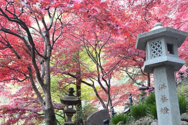丹沢 大山寺