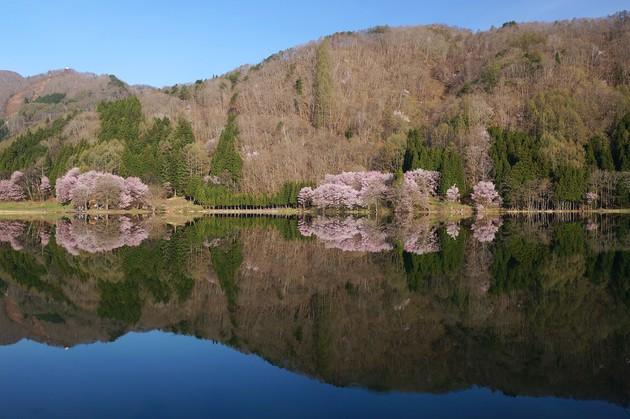 長野県大町市 中綱湖
