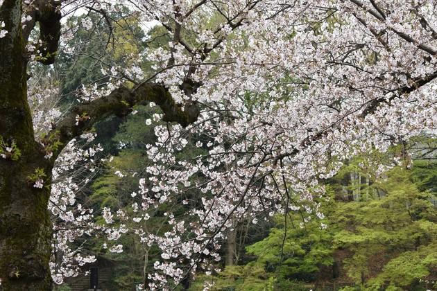 東京都杉並区 善福寺公園