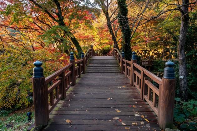 静岡県熱海市梅園