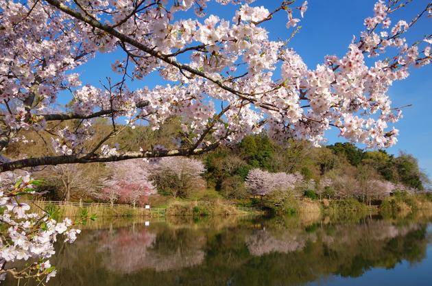 静岡県伊豆の国市 城池公園