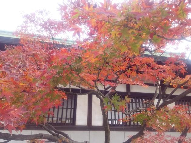 大阪城公園 豊国(ほうこく)神社境内