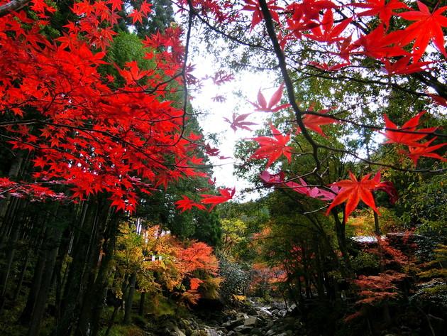 グリーンエコー笠形、兵庫県神河町