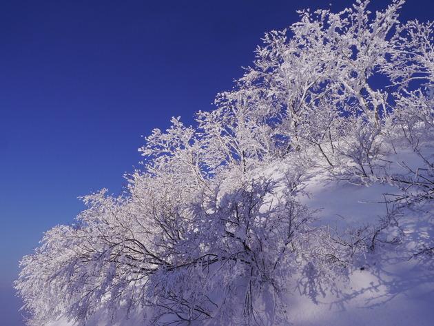 鳥取大山ホワイトリゾート