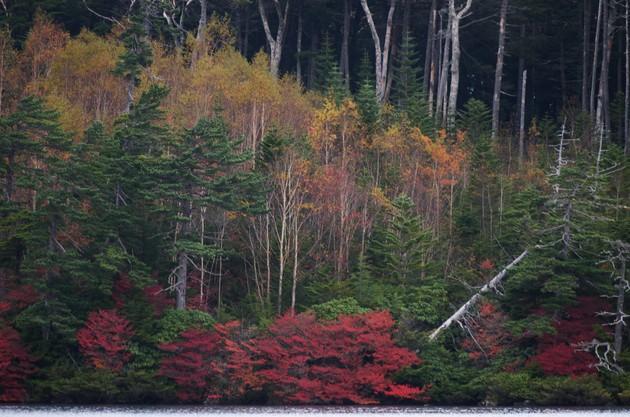 長野県白駒池