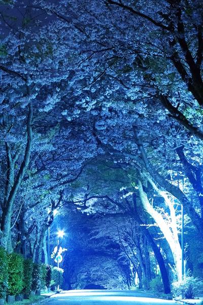 静岡県熱海市西熱海