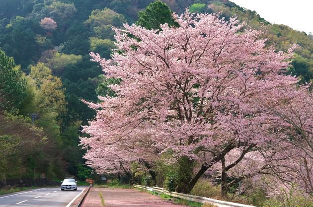 静岡県伊豆の国市韮山