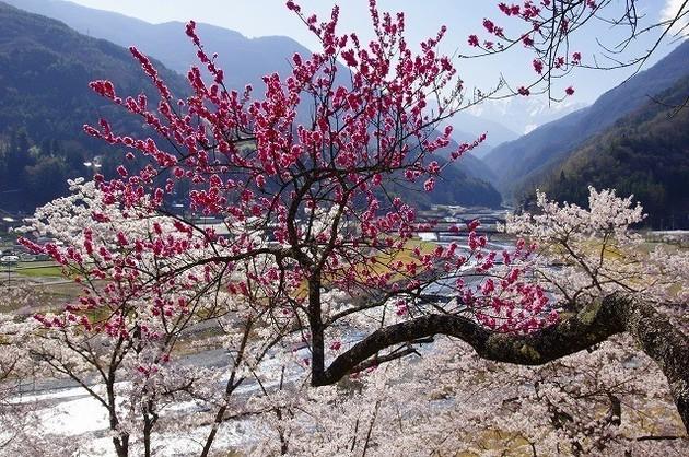 長野県大鹿村大西公園