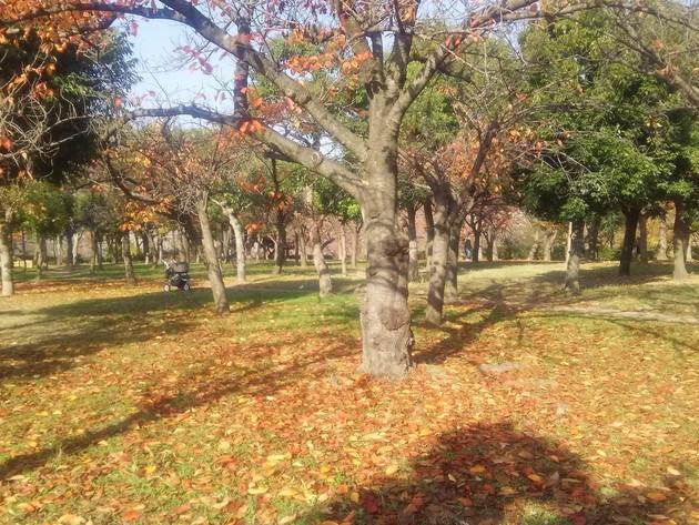 大阪城公園 玉造口