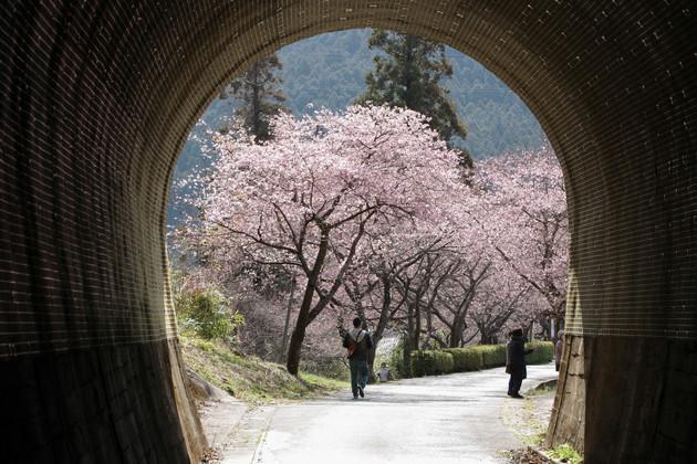 河津の桜並木