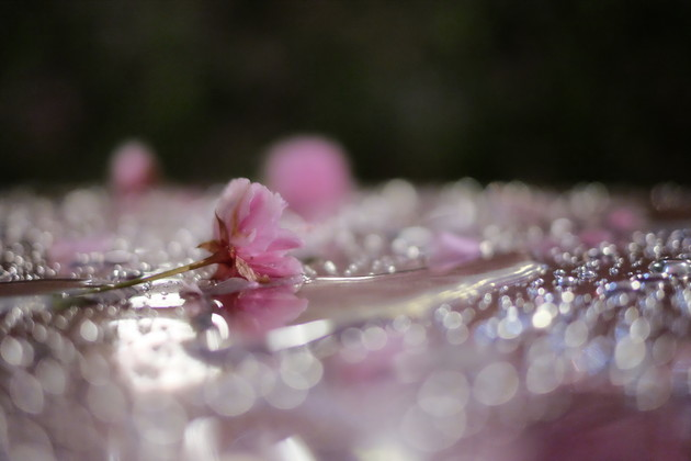 花のまわりみち(広島造幣局)