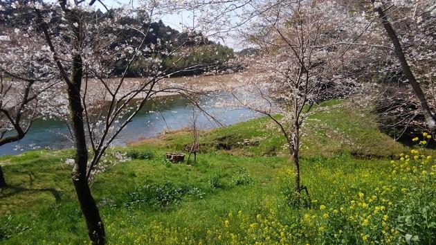 新城市 桜渕公園
