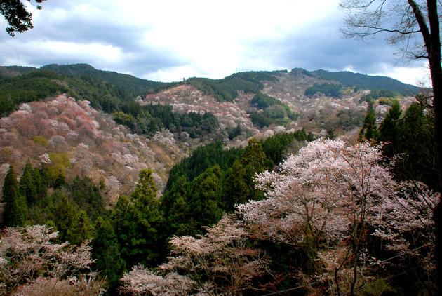 吉野山 奈良県吉野町