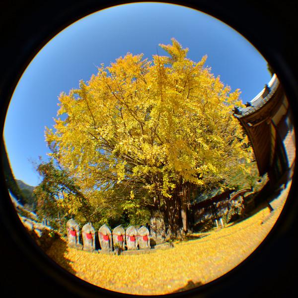 和歌山県古座川町光泉寺
