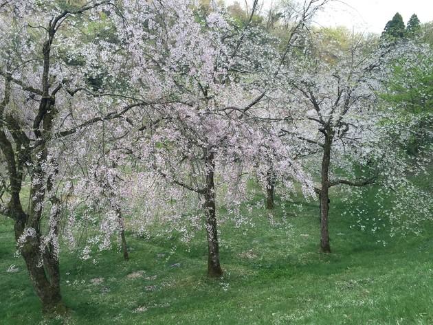 金沢市卯辰山公園四百年の森