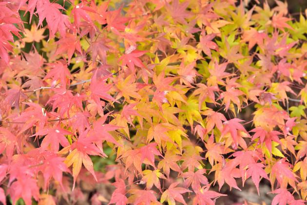 京都常照寺