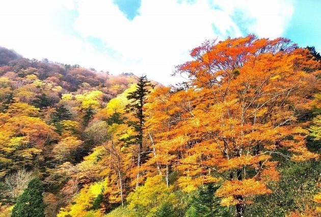 愛媛県久万高原町 岩黒山麓