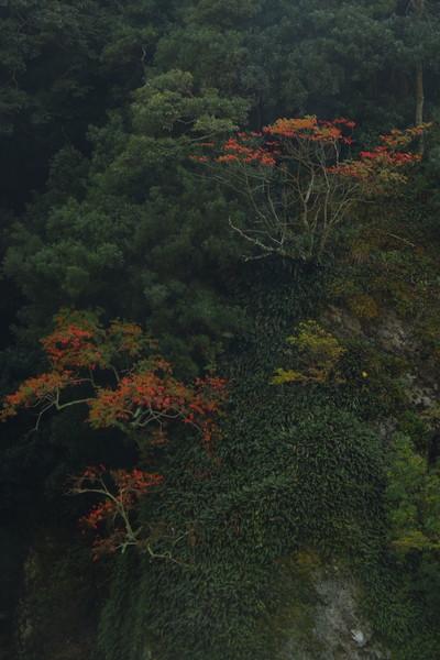 静岡県河津町