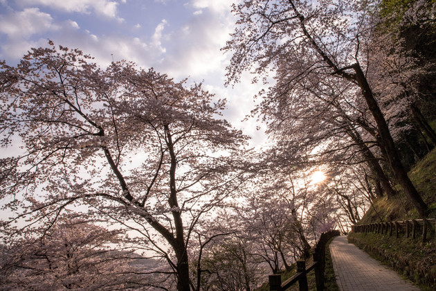 津久井湖 花の苑、相模原市