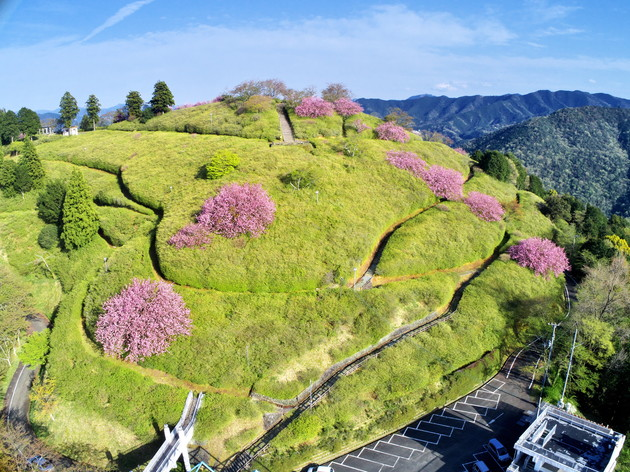 愛媛県大洲市とみす山公園