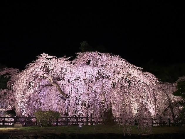 青森県弘前公園。