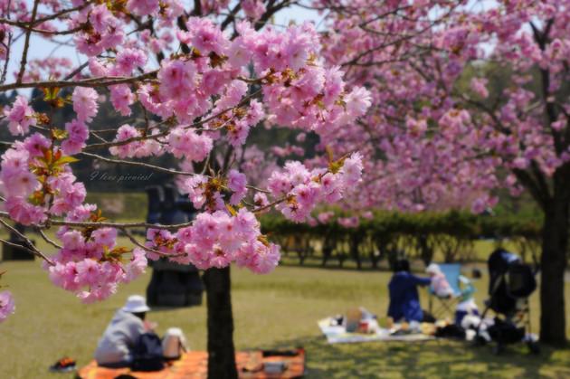 日本国花苑