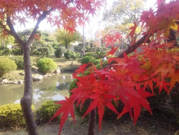 大阪城公園 日本庭園