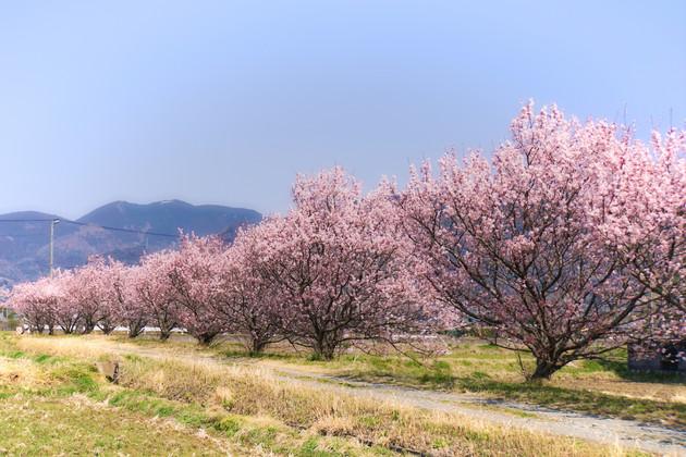 神奈川県南足柄郡
