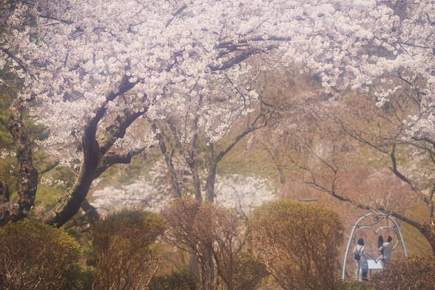 秋田県二ツ井町 きみまち阪公園