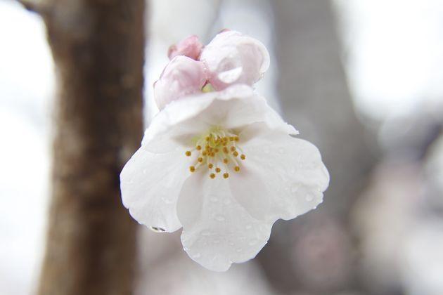 つくば市 面足神社(水堀)(おもたろじんじゃ)