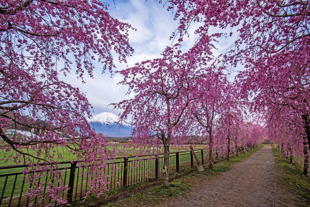 山梨県山中湖村 花の都公園