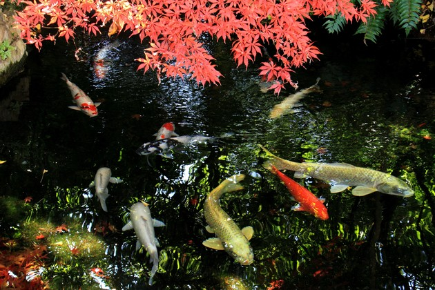 徳島県板野郡上板町 四国霊場6番札所「安楽寺」