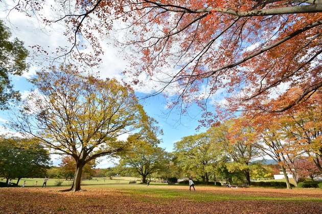 大阪万博公園