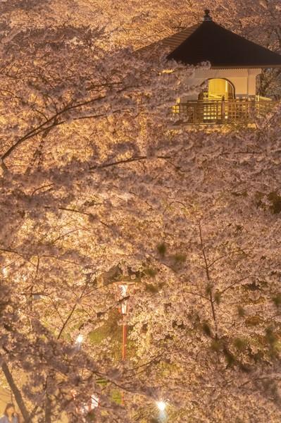 秋田県由利本荘市 本荘公園