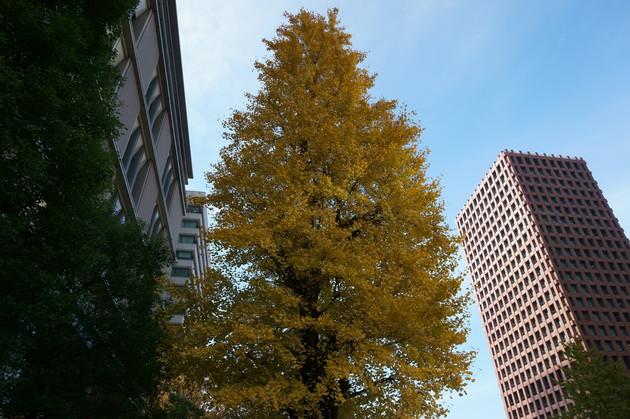 東京駅近辺