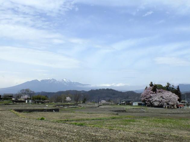 わに塚の桜近辺