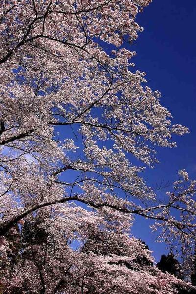 千葉県 千葉市 泉自然公園