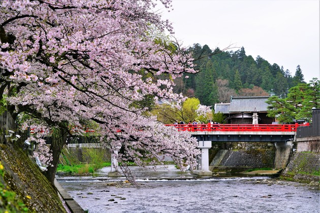 宮川沿い、岐阜県高山市
