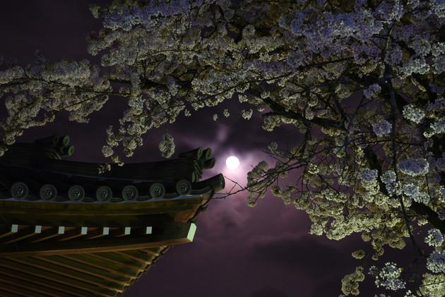 大石寺、静岡県富士宮市