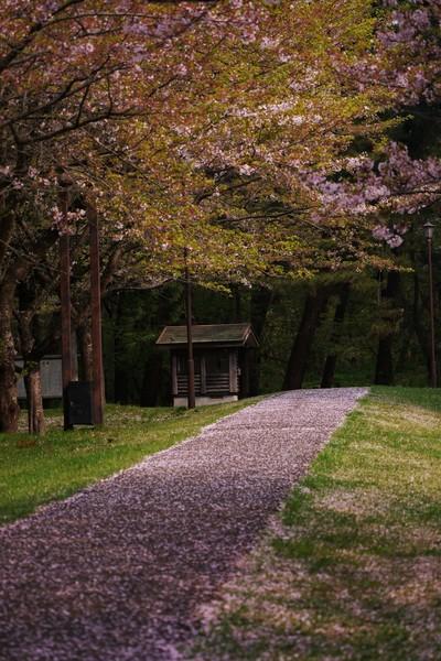 秋田県能代市 風の松原