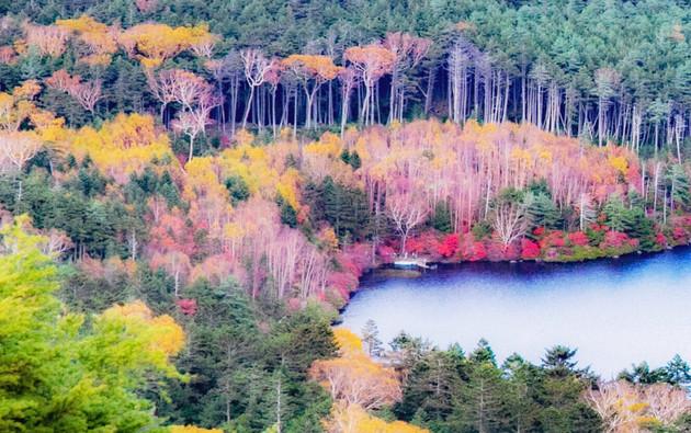 白駒池 高見石