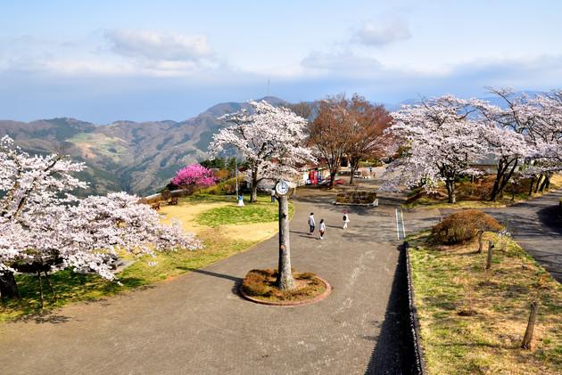 埼玉県皆野町美の山