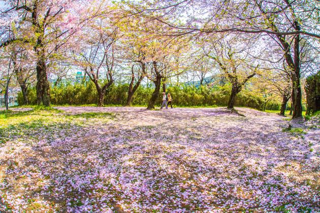 広島市中区白島