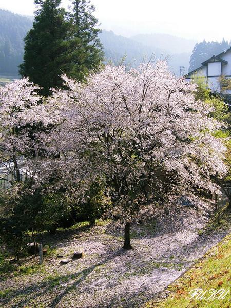 熊本県南小国町