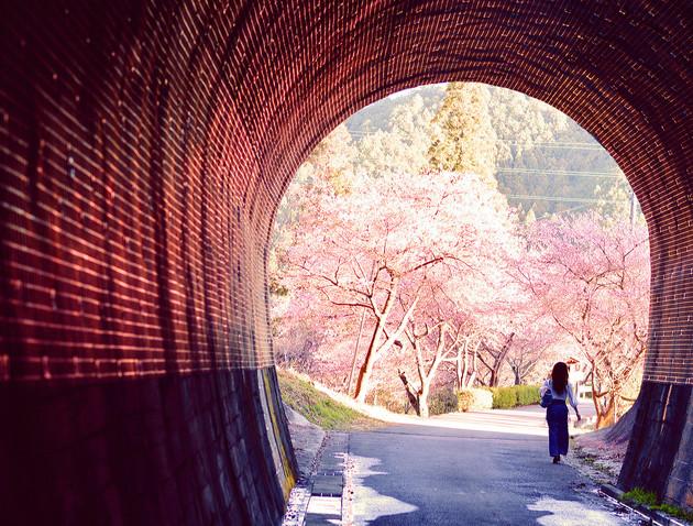 愛知県新城市本長篠旧田口線跡トンネル出口