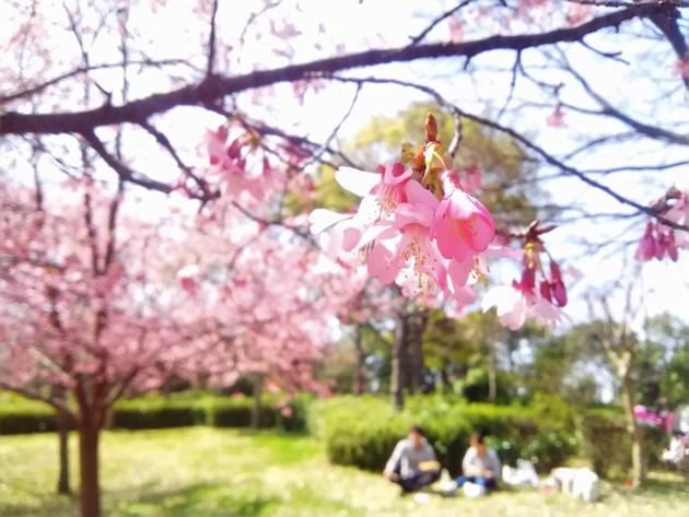 大阪 鶴見緑地公園