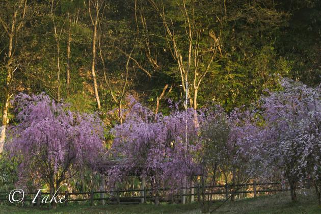新潟県五泉市 森林公園
