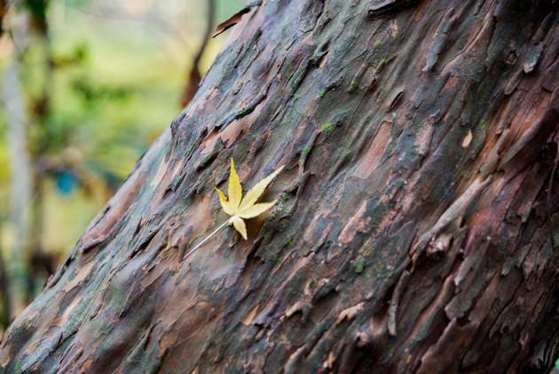 兵庫県三木市 県立三木山森林公園