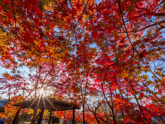 京都市真如堂