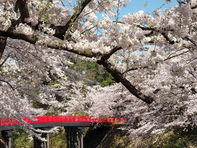 弘前公園、内濠